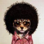 dj_disco_funk_mariage_toulouse_31